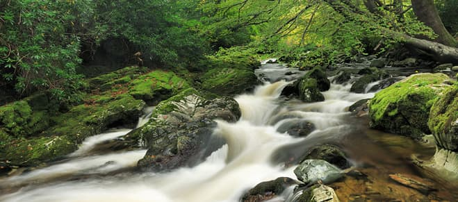 Tollymore Forest, Co. Down, N.Ireland
