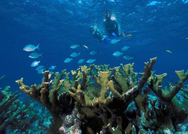 Snorkelers and elkhorn coral at Biscayne National Park, Florida, USA