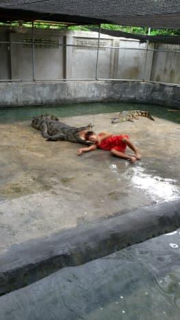 Crocodile Farm Show at Nong Khai (Taken in August 2015)