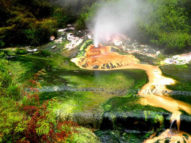 Geyser at thermal park just outside of Rotorua