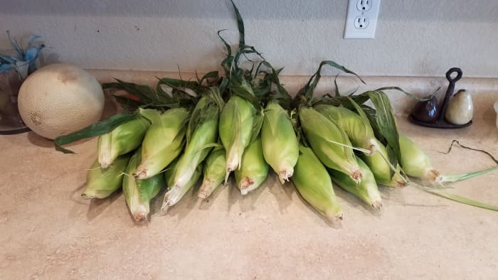 Start with a bunch of corn.