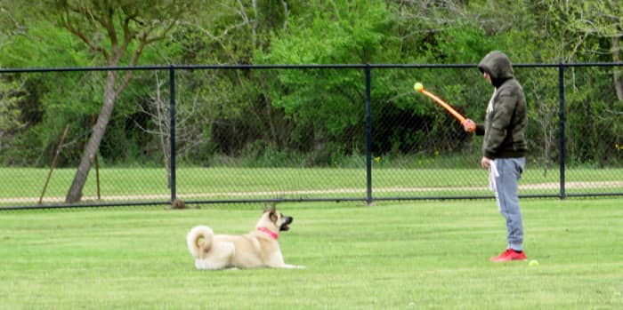 Ready to catch that ball at the Millie Bush Bark Park