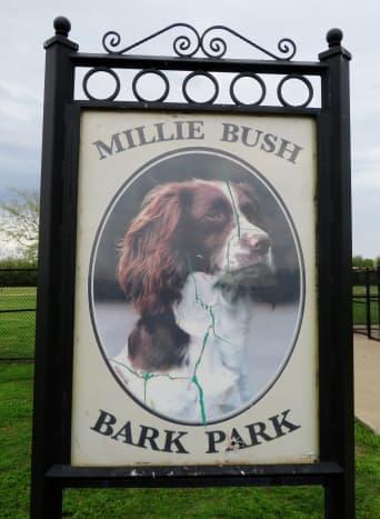 Likeness of Millie Bush
