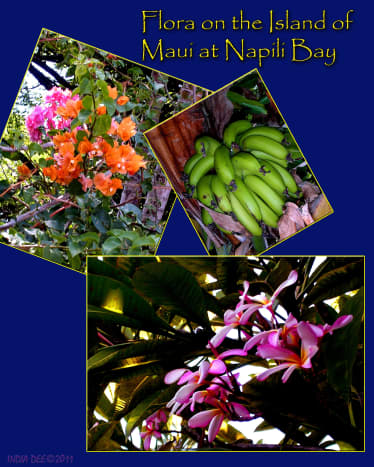 A collage of color and aroma met us each morning as we encountered beautiful flora right outside our condominium door on Maui, at Napili Bay.