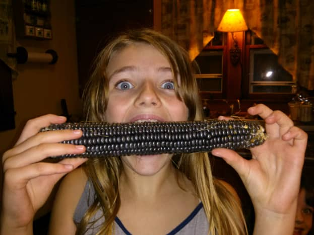 Hopi blue corn can be eaten on the cob when young.
