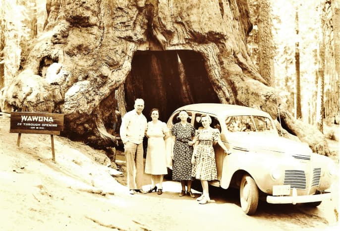 The photo above shows my relatives back in the late 1930s or early 1940s going through a portion of a sequoia tree in Yosemite National Park. The 1881 passage through the Wawona Tunnel Tree sadly caused the tree to collapse in 1969.