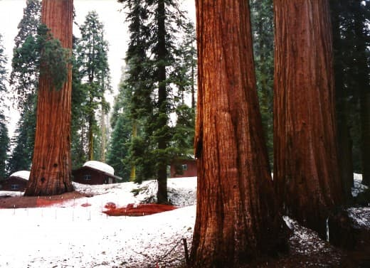 Some of the cabins that were due to be relocated in order to preserve the sequoia trees from damage.