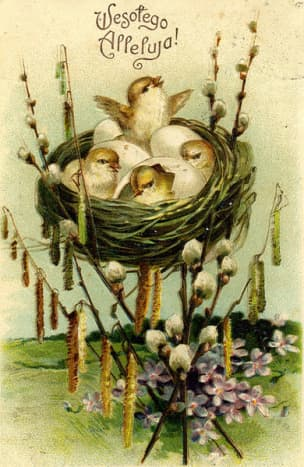 Cute little chicks in a nest.  Russian post card from before 1917.