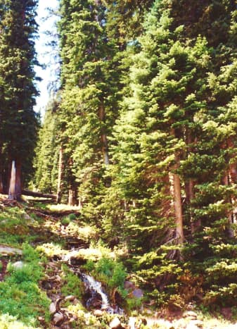 Scenery near the bottom of the Trail Ridge Road near Estes Park