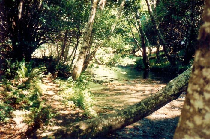 Apple Creek scenery in Oregon