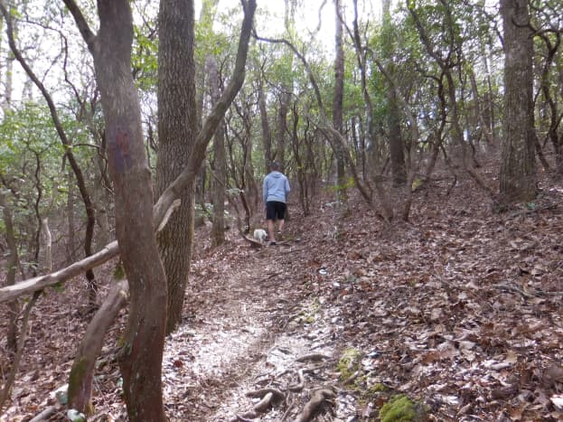 Frank Coggins Trail at Caesar's Head Mountain State Park