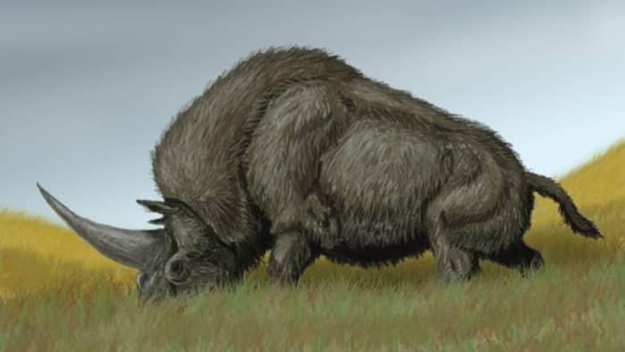 extinct-giant-siberian-unicorn-facts