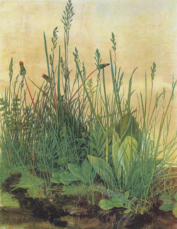 Swamp Weeds in watercolor