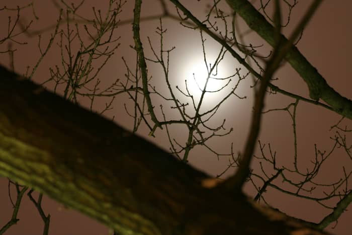 December Moon through Tree Branches