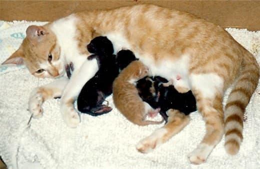 Angie nursing her kittens