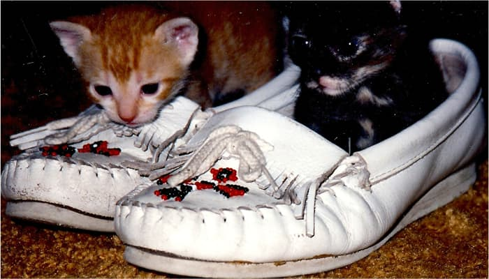 Two empty moccasins, perfect for two exploring kittens!