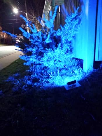 This bush is highlighted by the floodlight