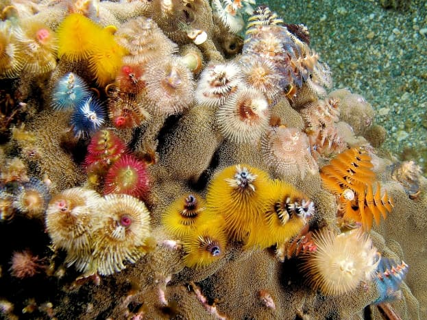 A group of Christmas tree worms