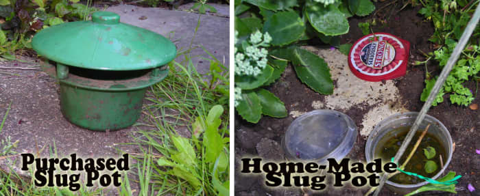You can buy a slug pot or make your own.