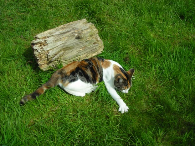 Cats are more likely to avoid your garden if you sprinkle old herbs and citrus peels around the perimeter.