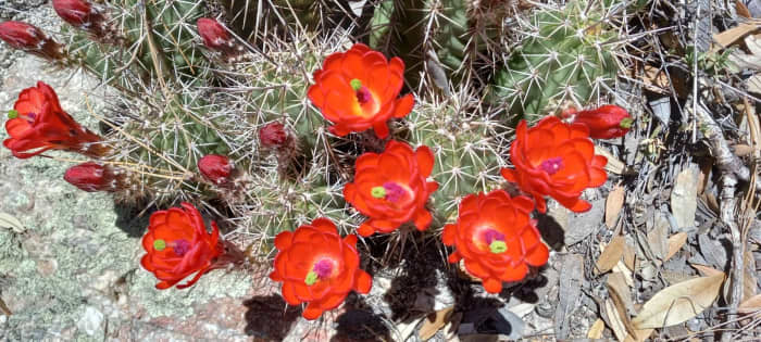 Desert delights: my remote jobs allow me to visit my family in Arizona as often as I'd like!