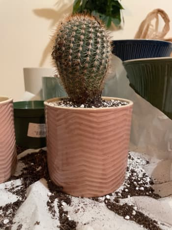 Most cactuses are safe for pets. As long as  they don't do too much with them since the spines are rather painful.