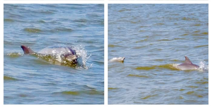 Cape May Whale Watchers: Dolphin Tour