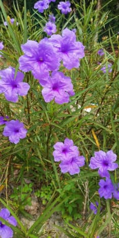 I love the purple color of these flowers.