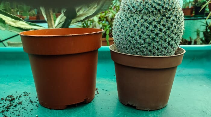 Choose a pot that is one size bigger than the current pot.