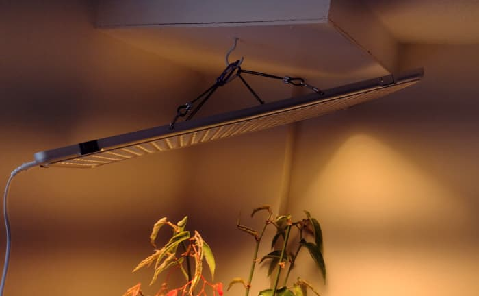 An LED grow light.