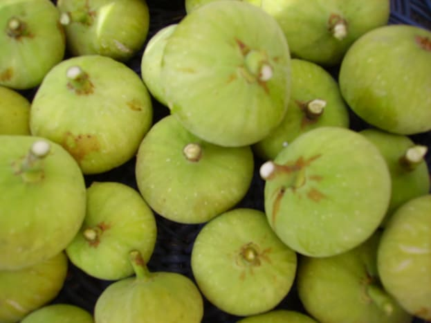 Fresh figs have a short shelf life.