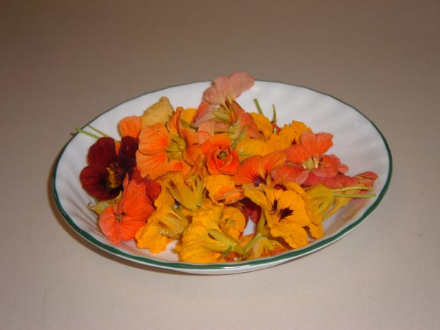 Pick Nasturtium flowers at full bloom