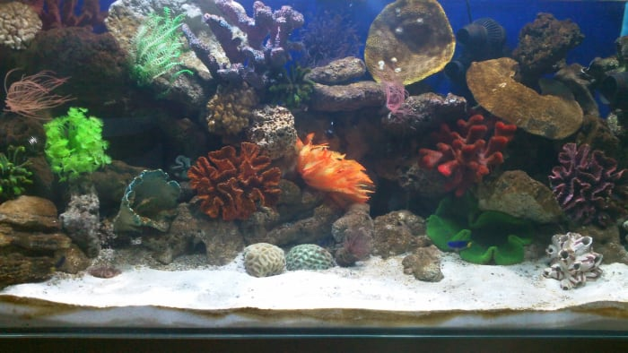 One of the marine reef aquariums recently set up. Dimensions: 48 in x 24 in x 24 in (L x W x H).