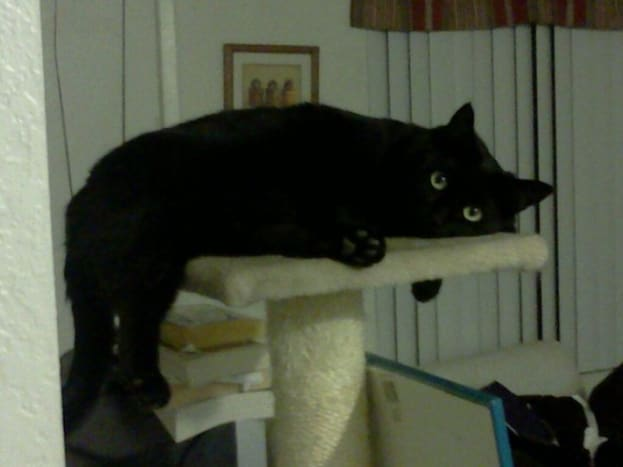 Phoebe on her favorite perch.