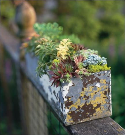 This succulent garden was planted in an old, paint stained container and placed on a fence for good effect.