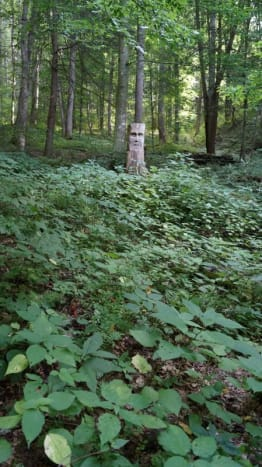 """The nettle growing in my backyard.  The """"totem"""" is my husband's carving."""