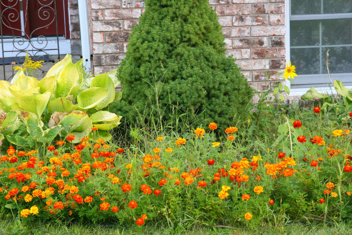 Weeds, grasses, and other unwanted plants should be removed in the fall, to prevent their return in the spring.