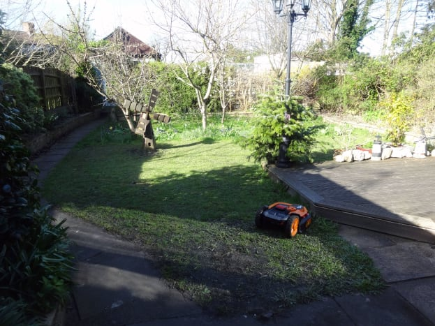 Our lawn with the mini-orchard and spring bulbs at the far end.
