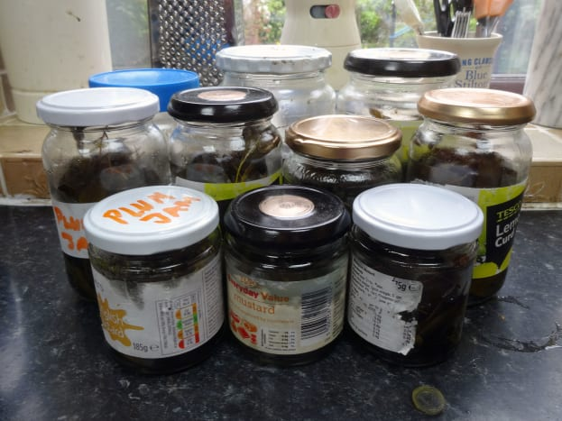 After a month in the sunshine the oil in jars is ready for straining, to separate the essential eucalyptus oil from the leaves.