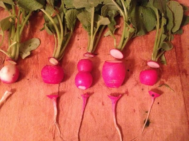 Clean and get your fresh radishes ready by cutting the tops and bottom of the roots off.  Slice them as thin or as thick as you want.  Chop the garlic and onion and slice the jalapeno into thin strips, if you are using it.