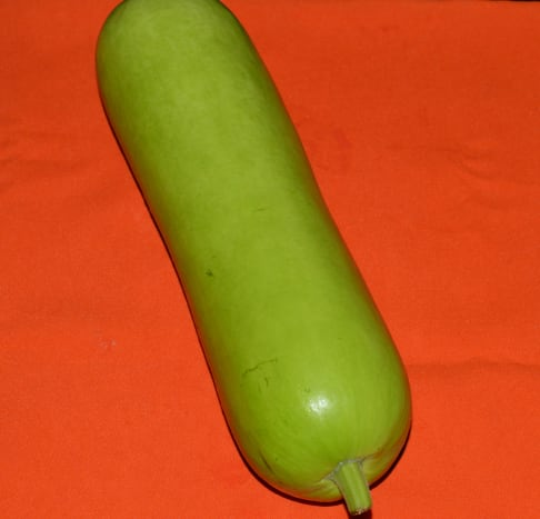The bottle gourd prior to cutting and grating.