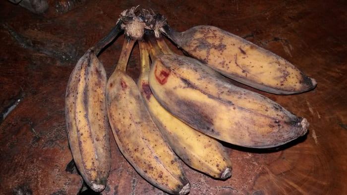 pisang goreng banana