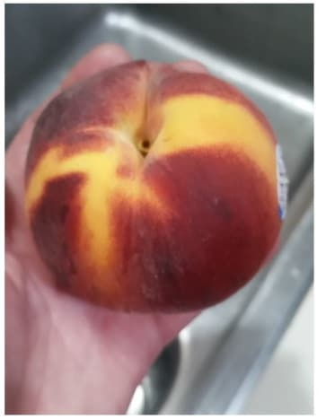 Peaches are furry, not to be confused with nectarines, which are smooth. Once ripe, they are ready to eat. We like to peel them, but other people don't.