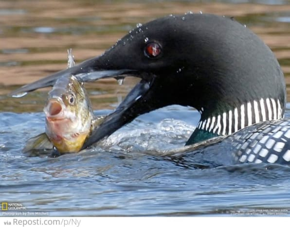 do-ducks-eat-fish