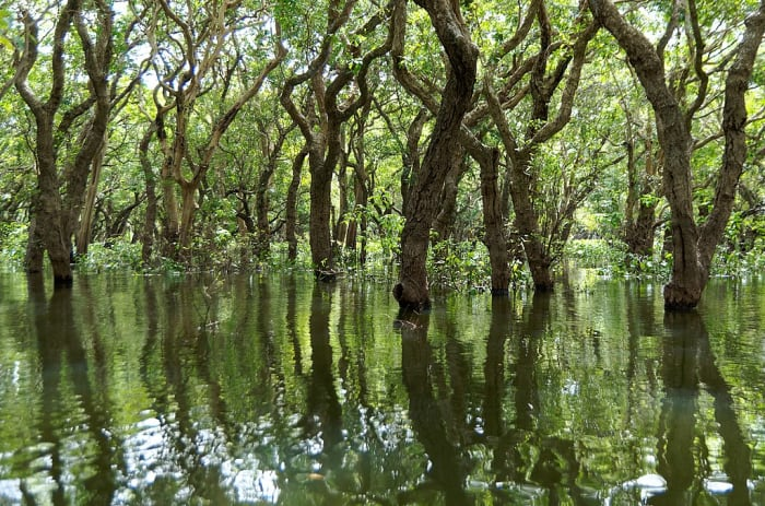 Mangrove Forest is an example of a natural ecosystem.