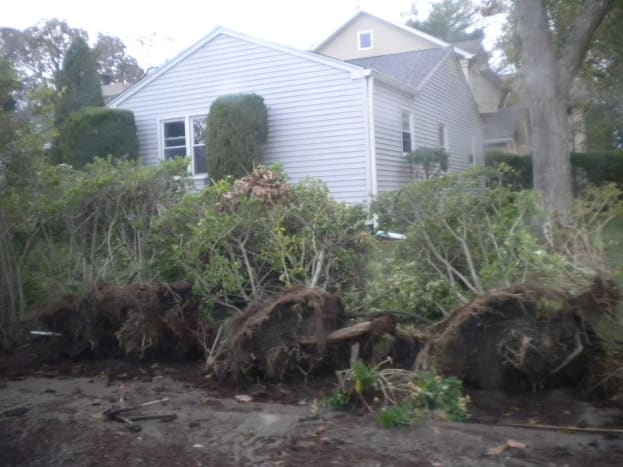 Trees toppled in Long Island