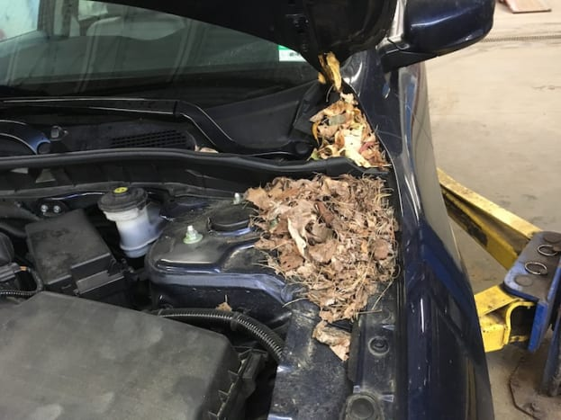 Mouse nest under the hood