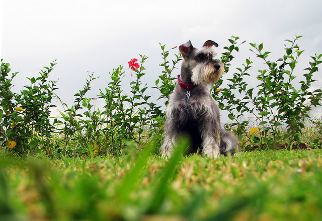 Easiest Small Dog Breeds To Housetrain
