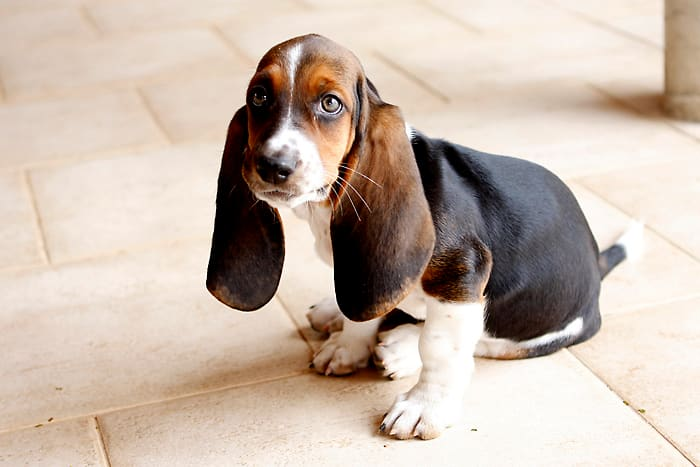 A Basset Hound will be perfectly happy napping in the sun until you come back home.