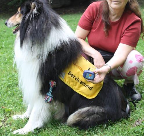 Epilepsy dog